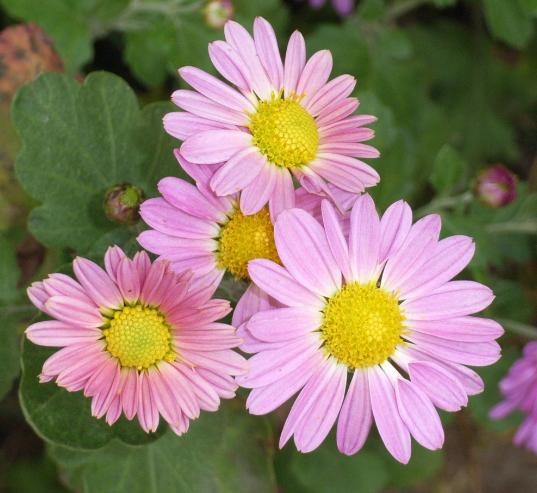 http://www.igoclub.com/image/flower.jpg